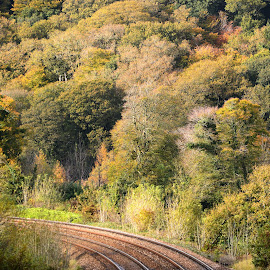 Curved Railway beneath Woodland by Bryan Wenham-Baker - Transportation Trains ( woods above rail track, railway, autumn, woodland over rail, fall trees, curved rails, forest, railway beneath woodland, curved rail track, autumn trees, rail track )