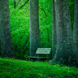 The Bench by Robert Mullen - Landscapes Forests ( greensprings park, green, bench, tall trees, trees, park )