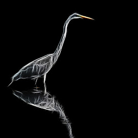 Great White Egret by Joe Saladino - Digital Art Animals ( water, bird, wading bird, egret, animal )