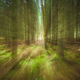 Coming to get you by Graeme Lawson - Landscapes Forests ( forests, creepy, trees, fast, running )