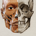 App 3D Anatomy for the Artist version 2015 APK