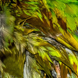 Wet Feathers by Pat Lasley - Abstract Patterns ( bird, damp, parrot, wet, feathers )