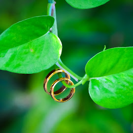 A Story of Love by Curly Yanni - Wedding Other ( love, story, ring, wedding, cincin, rings, marriage )