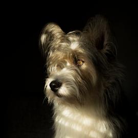 The Waiting by Jacqui Sjonger - Animals - Dogs Portraits ( natural light, pet photography, beautiful, dog portrait, intense, beauty, cute, sunlight, pet portrait, companion, pet, friendship, dog, light, friend,  )