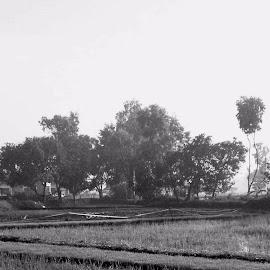 Pinggiran sawah by MOH BADRUTTAMAM SYAH - Landscapes Prairies, Meadows & Fields