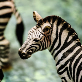Zebras by Paul Toscano - Artistic Objects Toys ( animals zebras toys zoo play,  )