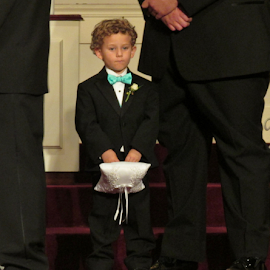 Ring Bearer by Terry Linton - Wedding Other (  )