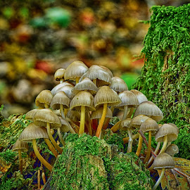 Big Family ! by Marco Bertamé - Nature Up Close Mushrooms & Fungi ( autumn, family, fall, moss, forest, leaves, big, crowded, mushrooms )