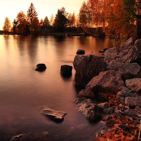 Autumn colors by Julija Moroza Broberg - Landscapes Forests ( water, orange, sweden, autumn, sunset, trees, lake, forest, leaves, woods )