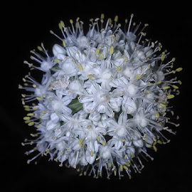 Onion by Misty Baker - Nature Up Close Gardens & Produce