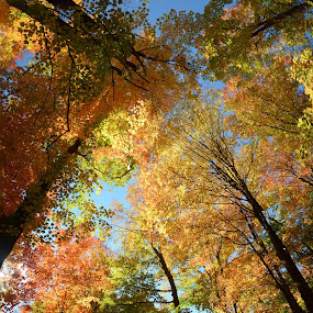 360 degrees of colour by Vita Perelchtein - Novices Only Landscapes ( forests, explore, fisheye, canada, green, forest, ontario, yellow, colour, red, tree, nature, color, autumn, shadow, fall, trees, hamilton, shade, rainbow )
