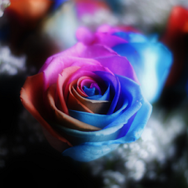 Muted Layers by Sylvia Meier - Artistic Objects Other Objects ( contrast, rose, color, bright, artistic )