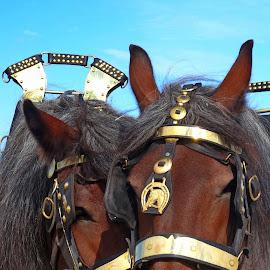 Hello love.. by Nico Kranenburg - Animals Horses ( animals, horses, farm horses, portrait, farming,  )