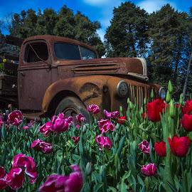 Rusty in Heaven by Hoomanz Xandi - Transportation Automobiles