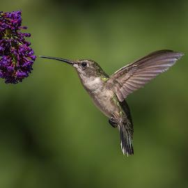 About by Roy Walter - Animals Fish ( bird, animals, hummingbird, wildlife, garden )