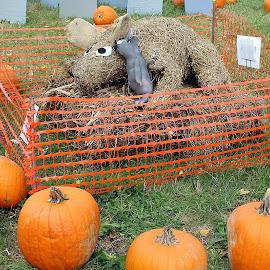 Dog by Lenora Popa - Public Holidays Halloween ( holiday, pumpkin, fall, harvest, hay sculpture, halloween )