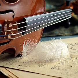 by Biljana Nikolic - Artistic Objects Musical Instruments (  )