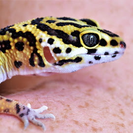 True Colors by Jennifer Parmelee - Animals Reptiles ( colors, places, reptile, animal, eyes )