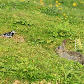 Hello  by Chris Mcgurgan - Novices Only Wildlife