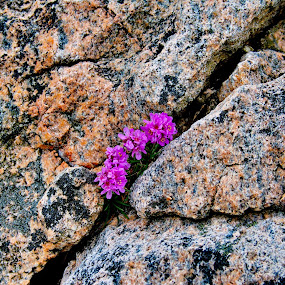 Strong flowers by Inna Cleanbergen - Landscapes Weather ( #everydaybergen, minimal, sotra, landscape, norway )