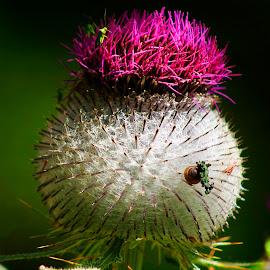 still life in nature by Bernarda Bizjak - Nature Up Close Other plants