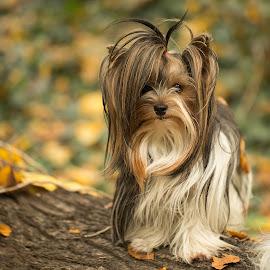 by Jana Vojtěchova - Animals - Dogs Portraits