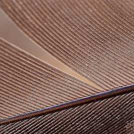 Flowing Lines by Prasanta Das - Abstract Patterns ( feather, flowing lies )