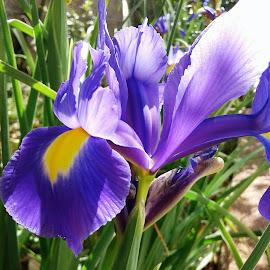 by Vanja Škrobica - Nature Up Close Gardens & Produce