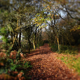 Path to where by Catherine Roberts - Novices Only Landscapes ( #autumn #woodland )
