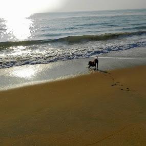 Dog and the sea by Govindarajan Raghavan - Animals - Dogs Playing (  )