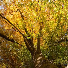 by Geralf Hambammer - Nature Up Close Trees & Bushes