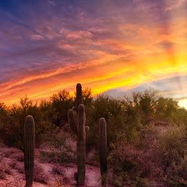 Tucson by Charlie Alolkoy - Landscapes Deserts ( desert, sunset, arizona, tucson, sunrise, cactus )