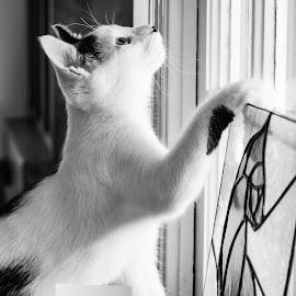 by Ashley Jill - Animals - Cats Playing (  )