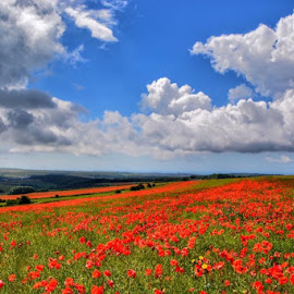 Poppies and clouds by Nicky MacQueen - Landscapes Prairies, Meadows & Fields ( #poppies #clouds #poignant )