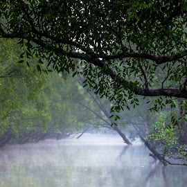 Canal at Sundorbon mangrove forest.  by Mahmudul Tapon - Landscapes Forests ( nature, wildlife, forest, landscape, mangrove )