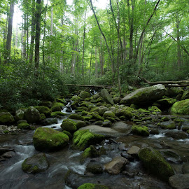 by Greg Bennett - Landscapes Forests ( water, forests, earthly, stream, jade, great smoky mountains national park, green, mood, forest, scenic, relaxing, revive, nature, emotions, trees, meditation )