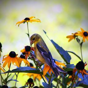 by John Ireland - Animals Birds