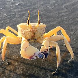 Ghost Crab by Abdul Rehman - Instagram & Mobile iPhone ( pakistan, gwadar, national geographic, beach, ghost, crab )