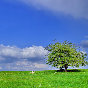 pictures of a Single Tree. by Miloš Karaklić - Landscapes Travel (  )