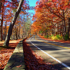 Country Road by Cal Brown - Landscapes Travel ( letchworth, fall colors, autumn, road trip, state park, road, travel, landscape,  )