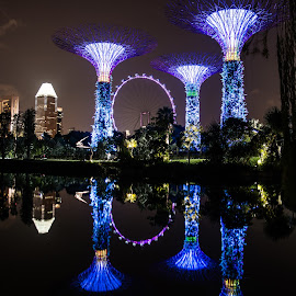 Singapore Gardens by the Bay by Pierre Tessier - City,  Street & Park  City Parks ( singapore,  )