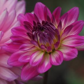 by Darrell Tenpenny - Flowers Single Flower (  )