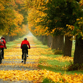Alley Veltrusy by Irena Brozova - City,  Street & Park  City Parks ( cyclists, autumn, color, leaves, alley )