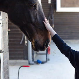 Love never fails_  by Lena Athanasiadou - Animals Horses