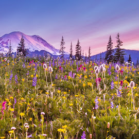 Wildflower Time by Judi Kubes - Landscapes Travel ( clouds, wildflowers, sky, mountain, mt rainier, purple, colorful, sunset, flowers,  )
