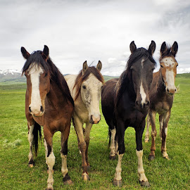 Up Close & Personal by Dave Bower - Animals Horses (  )