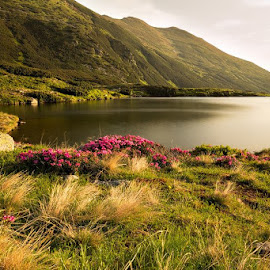 In the mornign sun by Ciprian Miresan - Landscapes Mountains & Hills ( clouds, water, lake, flower, sun )