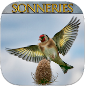 Free Download Top Sonneries Oiseaux APK for Samsung