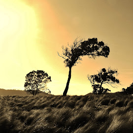 Simple Beauty by Sarah Harding - Novices Only Landscapes ( sepia, tree, silhouette, novices only, landscape )