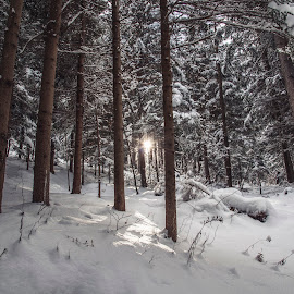 Sunrise in the winter, snowy Forest by Aleš Krivec - Landscapes Forests ( cold, beautiful, forest, day, fairytale )
